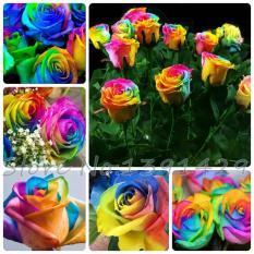 Benih Biji Mawar Rainbow Harga Untuk 1pak Isi 20 Biji Rose Colorfull Bunga Pelangi Seed Bibit Taman Berkebun Garden Flowers
