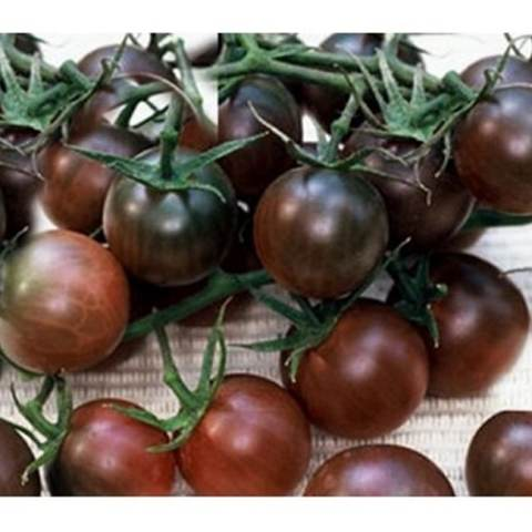 Bibit Benih Seeds Blackcherry Tomat Sayur Unik Hitam