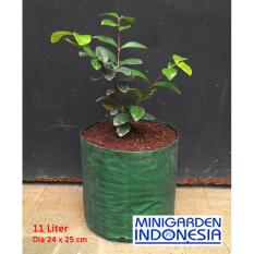 Planterbag 11 Liter no handle cocok u net pot netpot hidroponik cabai cabe .