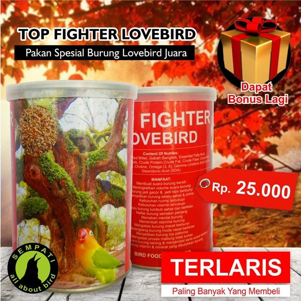 ... Top Fighter Lovebird Sempati Pakan Lomba Burung Lovebird Juara Rajin Ngekek Konslet Gacor