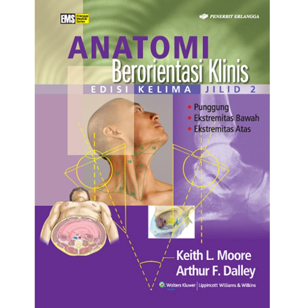 Erlangga Buku - Anatomi Berorientasi  Klinis Ed 5 Jl 2 : Keith L. Moore