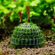 Shakalaka 5 Cm Akuarium Fi Tank Media Moss Bola Live Penutup Tanaman Filtrationdecoration-Intl