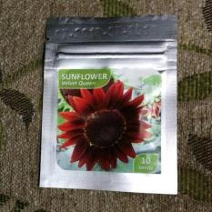DISKON Benih Bibit Bunga Matahari Sunflower VELVET QUEEN PALING MURAH