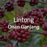 Harga Otten Coffee Green Bean Kopi Arabica Lintong Onan Ganjang 1 Kg Online