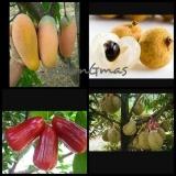 Diskon Paket Berkebun Bibit Mangga Kelengkeng Jambu Durian Branded