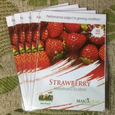 PROMO ORIGINAL Benih Bibit Strawberry Melotharia Scabra Maica Leaf