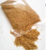 Harga Wheatgrass Seed Bibit Rumput Gandum Baru