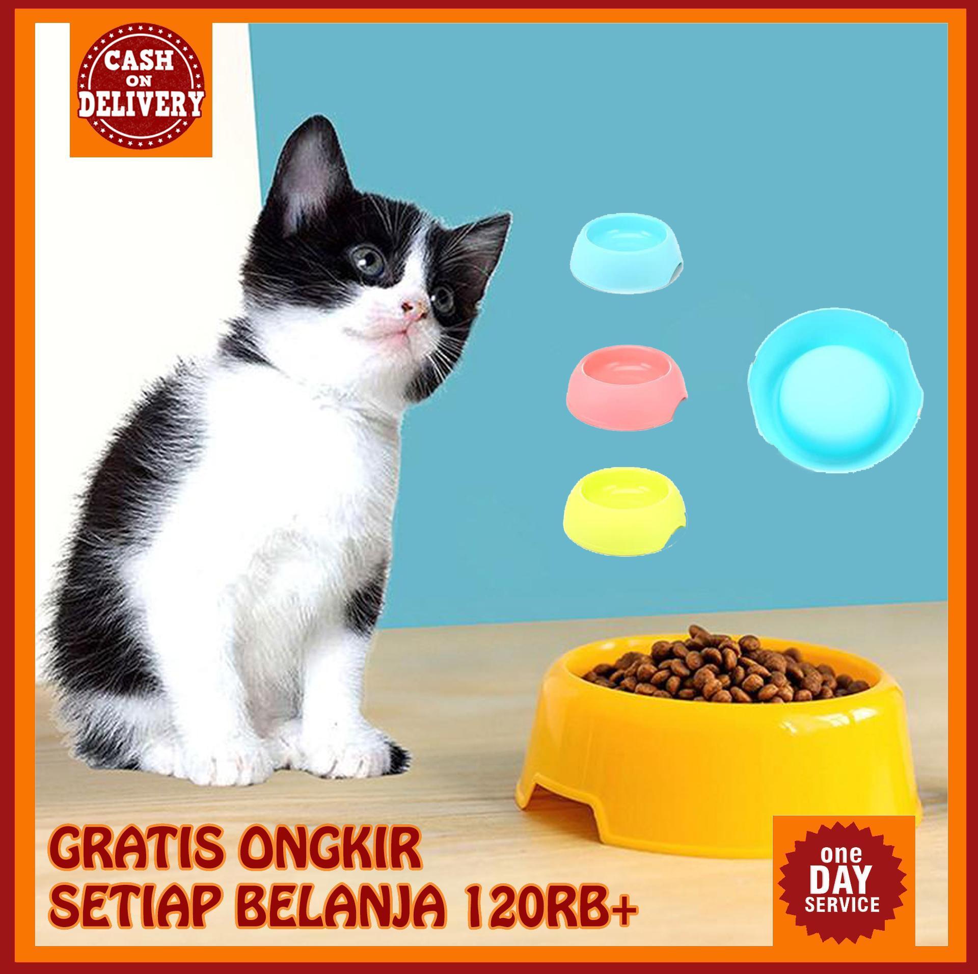 Gambar Kucing Makan godean.web.id