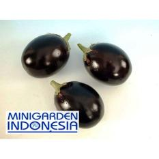 10 Benih terong Hibrida Starlight F1 bibit tanaman sayuran terung bulat hitam