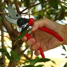 Iklan 1 Pc Pemangkasan Gunting Taman Pruners And Cutter Bunga Ergonomis Graft Intl