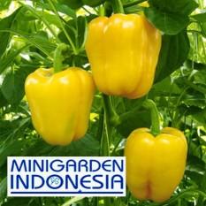 2 Benih Paprika Kuning Yellow Star F1 bibit tanaman sayur sayuran cabe cabai