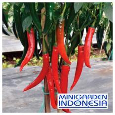 25 Benih Cabe F1 Pedas Hot Chili bibit tanaman sayur sayuran Cabai Merah Besar