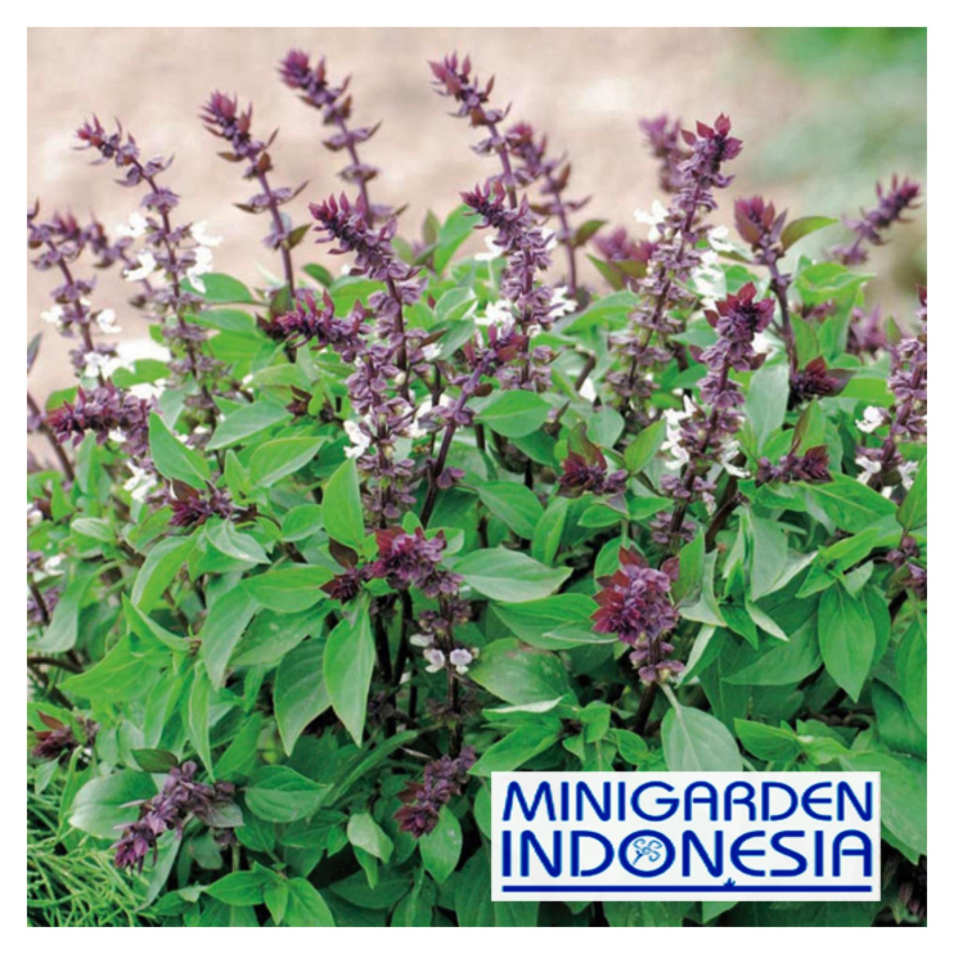 Harga preferensial 25 Benih Basil Thai F1 Mr Fothergills Bibit Tanaman Obat Herb Herbal beli sekarang - Hanya Rp4.530