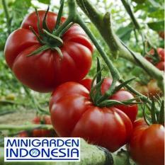 25 Benih Tomat keriting Mawar Rewako F1 Bibit Tanaman sayur sayuran / buah