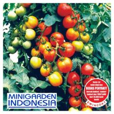 25 Bibit Benih Tanaman Tomat Permata F1