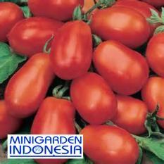 5 Benih Tomat Roma VF F1 fothergills bibit tanaman buah / sayur sayuran