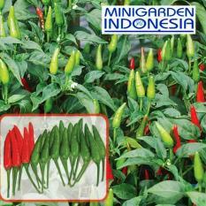 50 Benih Cabai Rawit Hijau Santika F1 bibit tanaman sayur sayuran cabe
