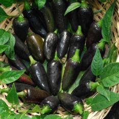 Amefurashi Benih / BIbit / Seed Cabe HItam Unik Black Hungarian Pepper