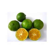 Amefurashi Bibit / Benih / Seed Buah Jeruk Limo / Limau