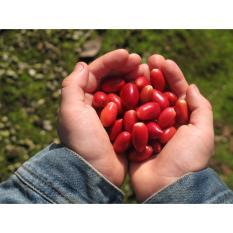Amefurashi Bibit / Benih / Seed Buah Miracle Fruit Buah Ajaib
