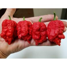 Amefurashi Bibit / Benih / Seeds Cabe Borg 9 Bleeding Pepper
