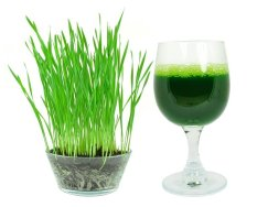 Amefurashi Bibit Benih Wheatgrass Rumput Gandum wheat grass Healthy for Juice