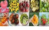 Amefurashi Paket Hemat 10 Jenis Benih Sayur Tomat Original