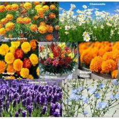 Diskon Produk Amefurashi Paket Hemat Benih 16 Jenis Bunga Edible Flower