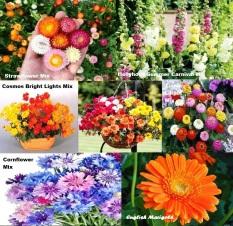 Harga Amefurashi Paket Hemat Benih Bibit Bunga Musim Panas Cantik Unik Dan Menarik Satu Set