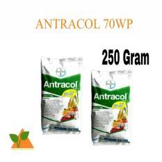 Bayer Antracol 70WP 250Gr. Bayer Antracol 70WP 250Gr. Rp40.000. (1). Jawa Barat. Bayer - Ethrel 480 Sl -Zat Pengatur Tumbuh - 100 Ml