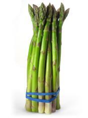 Benih Asparagus Import