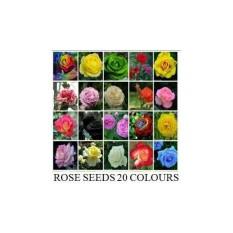 Benih Bibit Biji Bunga Mawar 20 Warna (6 Pieces / Color)
