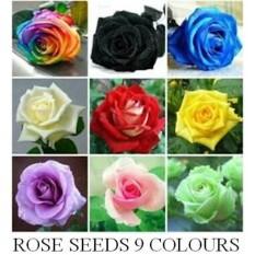 Benih Bibit Biji Bunga Mawar 9 Warna( 10 Biji Per Warna )