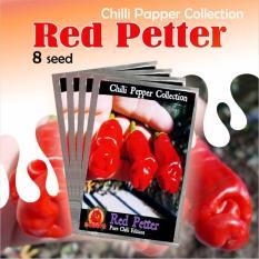 Benih Bibit Biji Tanaman Cabai Red Petter Cabe Porno Hias Unik 8 Seed