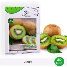 Benih-Bibit Buah Kiwi (Haira Seed)