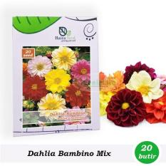 Benih-Bibit Bunga Dahlia Bambino Mixed (Haira Seed)
