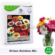 Benih-Bibit Bunga Krisan Rainbow Mix (Haira Seed)