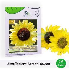 Benih-Bibit Bunga Matahari Lemon Queen (Haira Seed)
