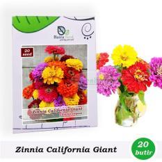 Benih-Bibit Bunga Zinnia California Giant Mix (Haira Seed)