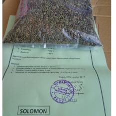Benih Sengon Solomon 1000gram Asli dgn Sertipikat