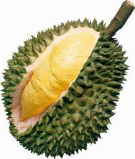 berisi 2 biji benih / bibit buah durian mini