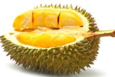 berisi 2 biji benih / bibit buah durian unggul