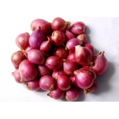 berisi 26 biji benih / bibit bawang merah kecil