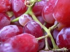 berisi 5 biji benih / bibit buah anggur merah muda