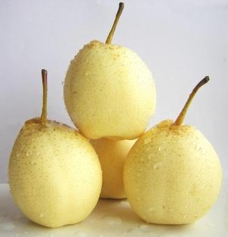 Price Checker berisi 5 biji benih buah pear china / cina pencari harga - Hanya Rp18