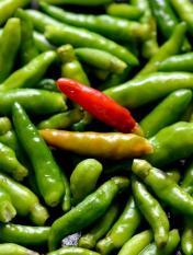 berisi 97 biji benih / bibit cabe / cabai rawit hijau