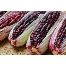 Bibit / Benih / Seeds Sayur Jagung Unik Purple Corn