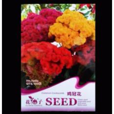 Bibit Bunga Benih Bunga Celosia Cristata Mixed 100 Biji – Retail Asia