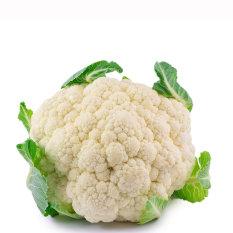 Bibit Bunga Benih Bunga Kol Putih (White Cauliflower)