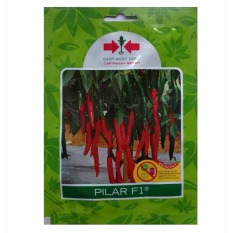 Bibit Bunga Benih Cabe Besar Pilar F1 1.500 biji – Panah Merah